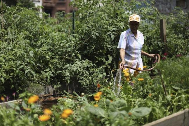halsey street community garden bed stuy - Halsey Garden